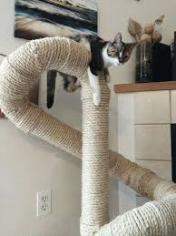 cats cattree