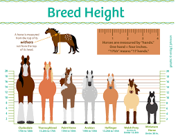 Pony Height Chart Horse Height Chart Horse Illustrated
