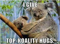 Koala Meme on Pinterest | Doge Meme, Bear Meme and Carmen Salinas Meme via Relatably.com