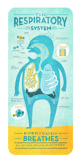 Biology Charts And Posters Cartoon Charts Of Body Systems Respiratory Respiratory