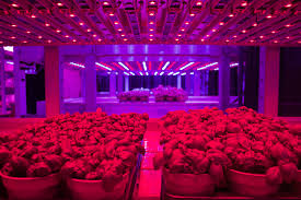 Horticultural Lighting Uk Leds Are Set To Change Horticulture By Increasing Yields