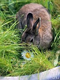 how do i keep rabbits out of my garden. Delighful Rabbits Rabbit In Container Eating Plants With How Do I Keep Rabbits Out Of My Garden E