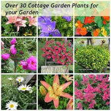 Small Picture Garden Design Garden Design with How to Grow a Cottage Garden