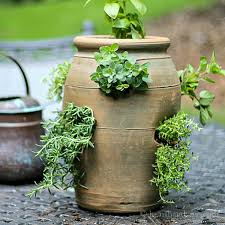 growing herbs in a strawberry pot for