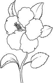Les 19 Meilleures Images Du Tableau Flower Coloring Pages Sur
