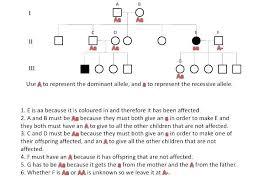 73 Efficient Simple Pedigree Chart Worksheet