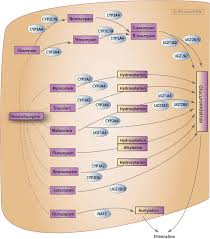 Benzodiazepine Pathway Pharmacokinetics Overview