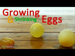 Growing And Shrinking Growing And Shrinking Eggs Experiments For Kids