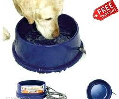 dog heated water bowl luxurious outdoor medium size of gallant plastic pet petsmart