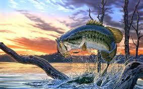 largemouth b fishing wallpaper background screensaver best