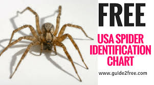 Free Spider Identification Chart Free Usa Spider Identification Chart Guide2free Samples