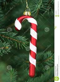 Candy Cane Decorations For Christmas Trees Candy Cane Hanging On A Christmas Tree Stock Photo Image of 35