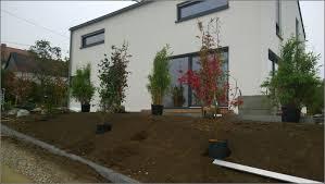 Sichtschutzbepflanzung Garten Garten House Und Dekor Galerie Sichtschutzbepflanzung