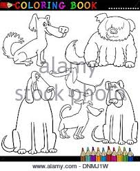 Small Picture Briard Stock Photos Briard Stock Images Page 4 Alamy