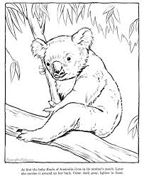 Small Picture Koala coloring sheets