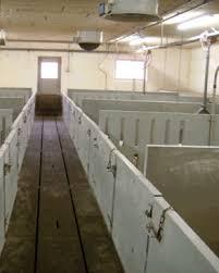 Sistema De Cama Profunda En Túnel De Viento Para CerdosPrecio Granja De Cerdos Engorde