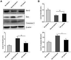 Immune Thrombocytopenia Induces Autophagy And Suppresses Apoptosis