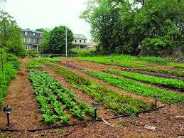 Kitchen Garden Farm Urban Entrepreneur Takes Farming Seriously Farm Markets