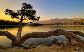 best nature background hd