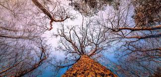 Die Richtige Perspektive Seidel Fotografie