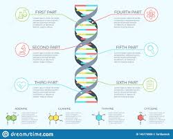Dna Infographic Genetic Spiral Genomic Model Molecule