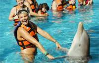 Image result for swim with dolphins in oahu