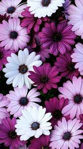 Purple Floral iPhone Wallpapers - Top ...