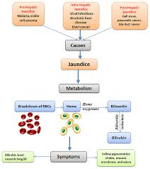 Frontiers Ethnopharmacological Approaches For Therapy Of