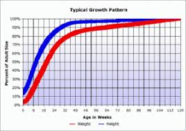 Growth Chart Training Chiweenie Puppy Growth Chart Puppy Growth Chart Chiweenie
