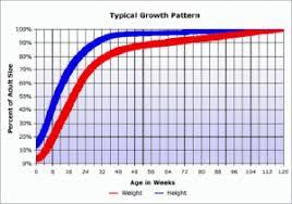 Average Pitbull Weight Chart Chiweenie Puppy Growth Chart Puppy Growth Chart Chiweenie
