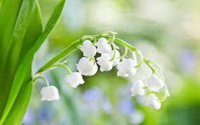 Free download Green Flower Wallpaper HD ...