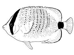 Mots Clefs Animals Fish Pacific Ocean Reef | Bebo Pandco