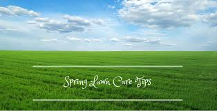 diy tips for spring yard maintenance