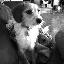 Dustin Pierce Pet Groomer - Home   Facebook