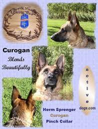 Herm Sprenger Prong Collar Size Chart Herm Sprenger Curogan Prong Collars