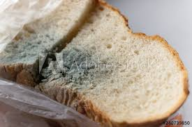 White Bread Mold Macro Background Buy This Stock Photo And