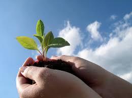 Promueven entre los camagüeyanos acciones para cuidado y protección del medio ambiente