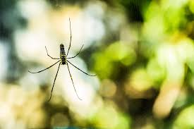 Common Spiders Poisonous Or Painful Northwest Exterminating
