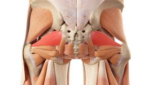 piriformis exercises to alleviate glute
