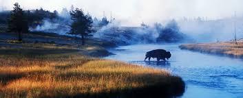 Imagini pentru parcul yellowstone
