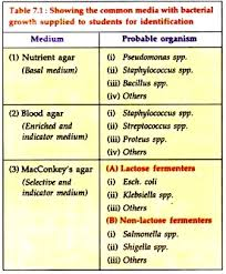 Identification Of Bacterial Growth 3 Mediums