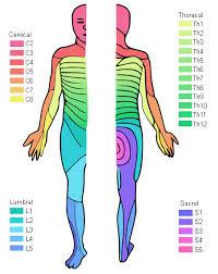 Dermatomal Pattern Interesting Myotome Charts Peopledavidjoelco