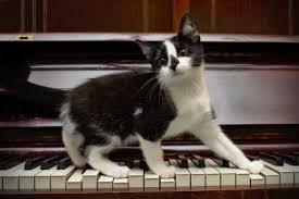 cute kittens sleeping on pianos. Beautiful Cute Cat And Piano And Cute Kittens Sleeping On Pianos I