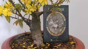 Truyện cổ tích của anh em Grimm - Lời tựa của dịch giả Nhật Vương