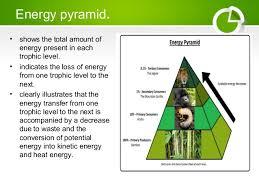 food web pyramid ecological pyramids food chain and food web