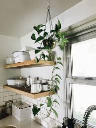 Bathroom : Plants In Bedrooms Help Sleepplants Bathroom Feng Shui ...