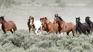 wild horses running. Contemporary Horses Mustang Monument Wild Horses Running And Wild Horses Running I