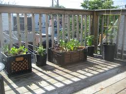 4 use milk crates as planters