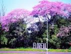 imagem de Floreal São Paulo n-2