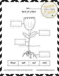 Best Solutions Of Plant Worksheets For Kindergarten On Refe ~ Koogra